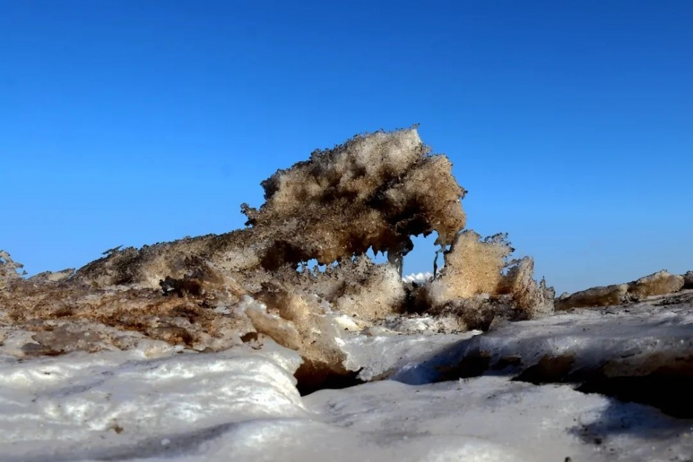 """这不是北极 这里是山东︱贝壳堤岛景区惊现""""北极圈无棣分圈""""极地冰原奇观"""