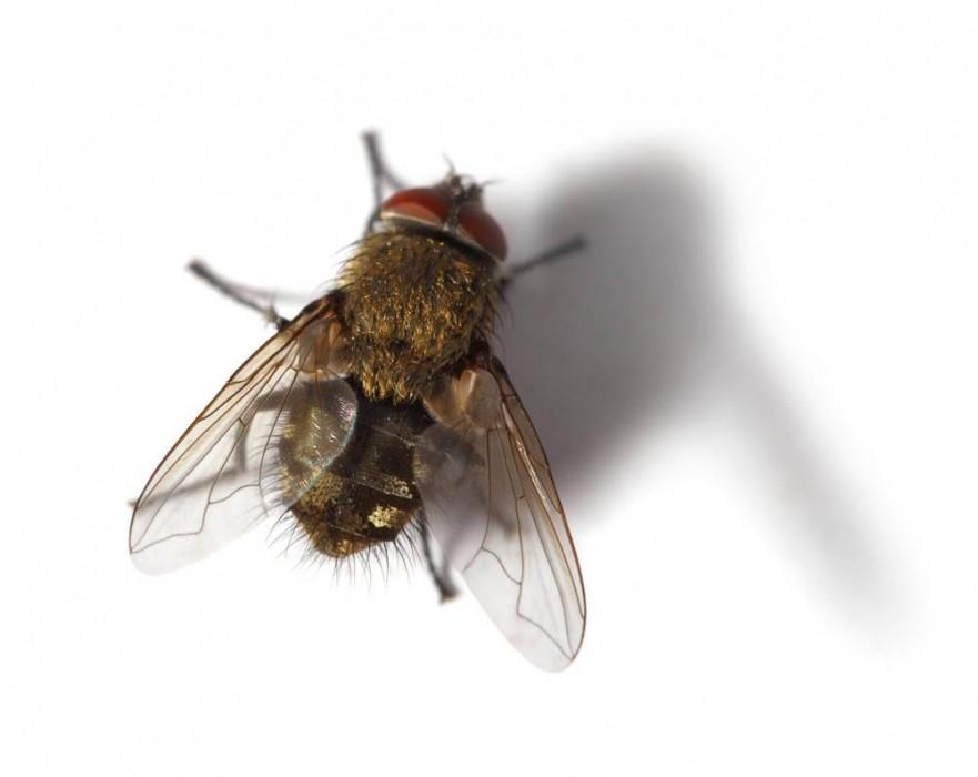 开店的老板点进来看看,为什么这些店里没有苍蝇蚊子呢?