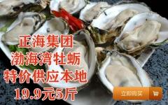 特价抢购五斤海蛎子(牡蛎、生蚝)19.9元,预售,仅限无棣本地客户购买